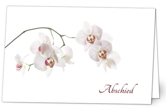 Orchidee in Weiss